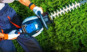 Gardening Maintenance Medway Gravesham Maidstone Kent